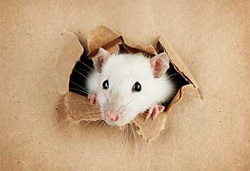 Four Signs You Need Rodent Proofing | Attic Cleaning Los Angeles, CA