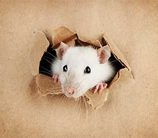 Signs You Need Rodent Proofing | Attic Cleaning Los Angeles, CA